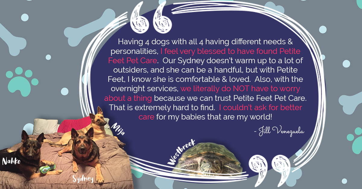 Review for our pet sitters