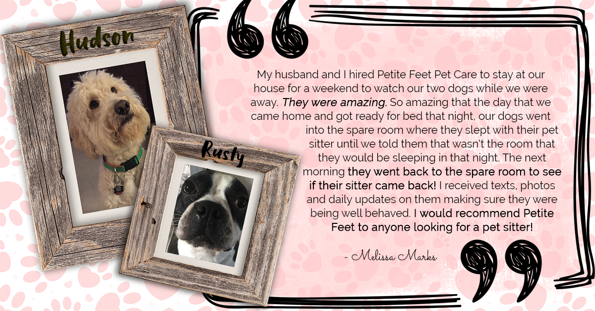 Pet sitting and dog walking testimonial for Hudson and Rusty