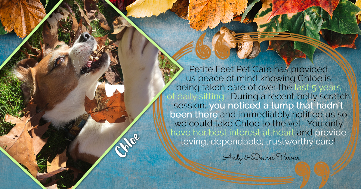 Pet sitting testimonial from Chloe's parents, Andy and Desiree
