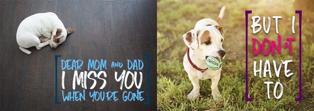 Your pets don't have to miss you when you're gone with our Greensburg pet sitting services.